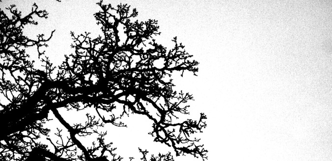 chinese new year, oal oak tree, setting intentions, new moon, poetry