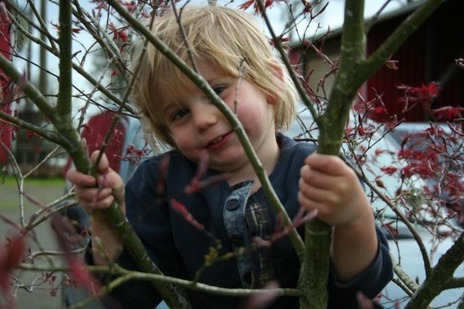 tree climber 1