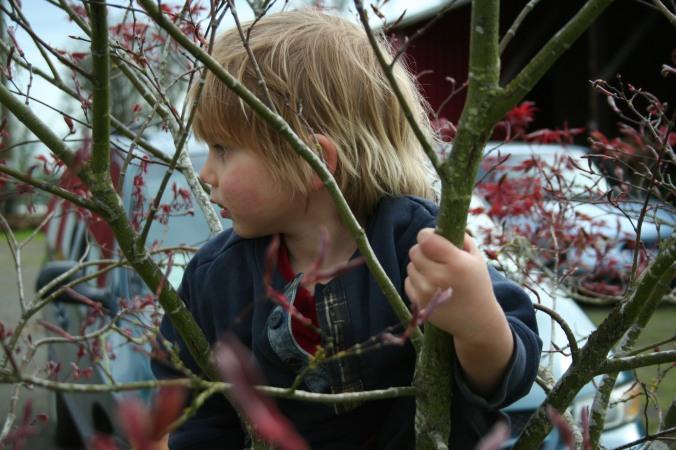 tree climber 2