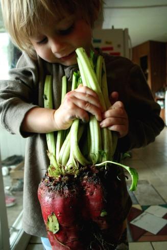 big heart-beet