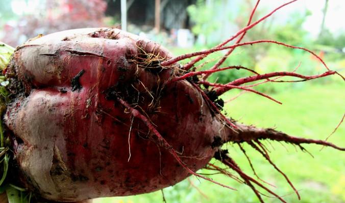 heart-beet