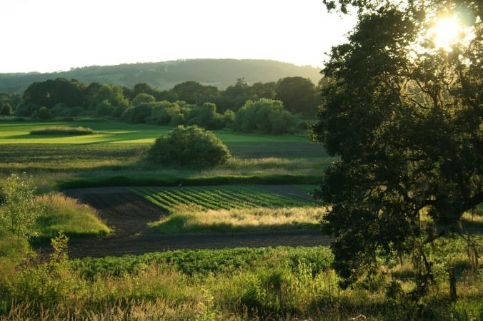 farm, farming, csa, field, summer, summer night