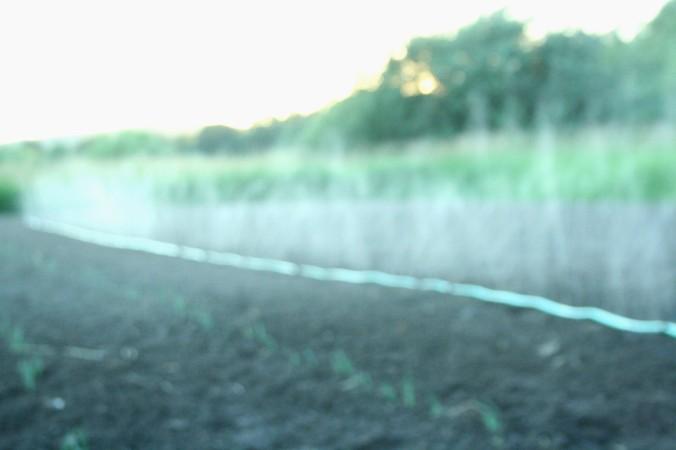 irrigation, farming, farm