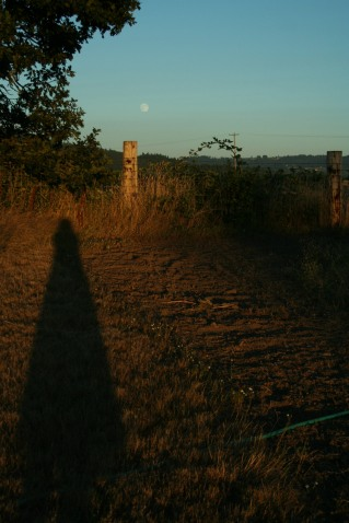 full moon, field, farm, sunset, moonrise, summer