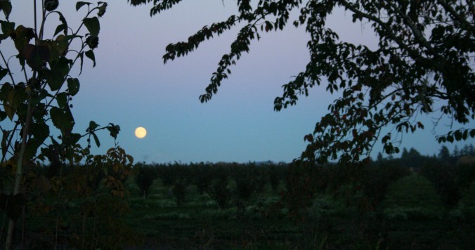 full moon, october, farm, sunset, life learning, gratitude, mindfulness, love