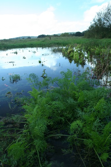 wet carrots, flooded veggies, farm, farming