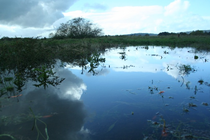 flooded veggies, farm, farming