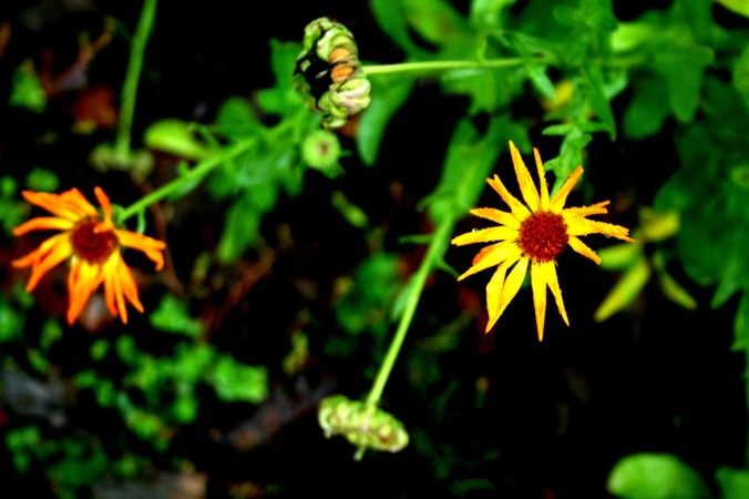 calendula, el dia de los muertos, the veil is thin, november, fall, winter, remembering
