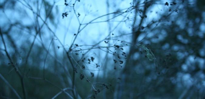 winter morning, january, farm, intentional living