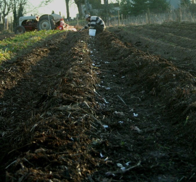 soil, love, farming, planting, weather, small farm