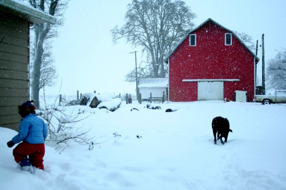 farm, snow, snow days, fun