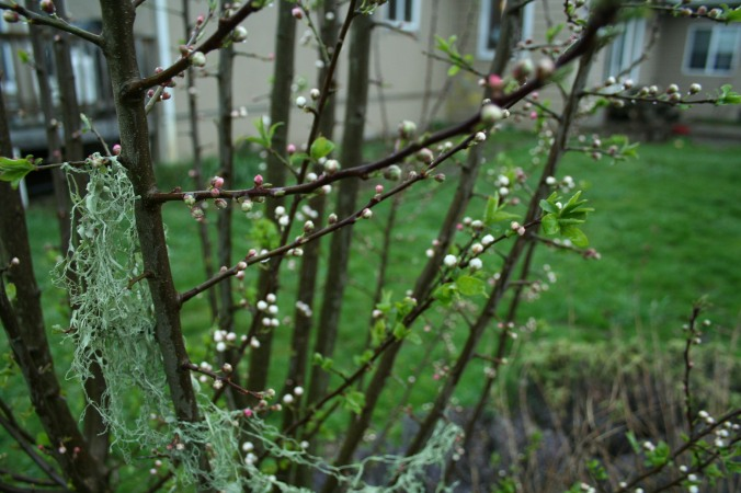 spring, farming, community, farmer's market, grace