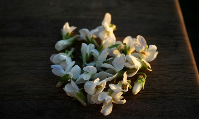 violets, spring, farm,